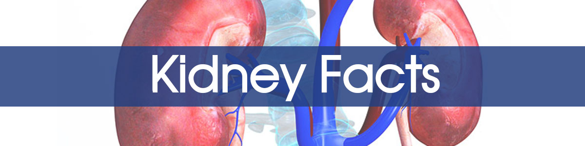 Kidney Facts